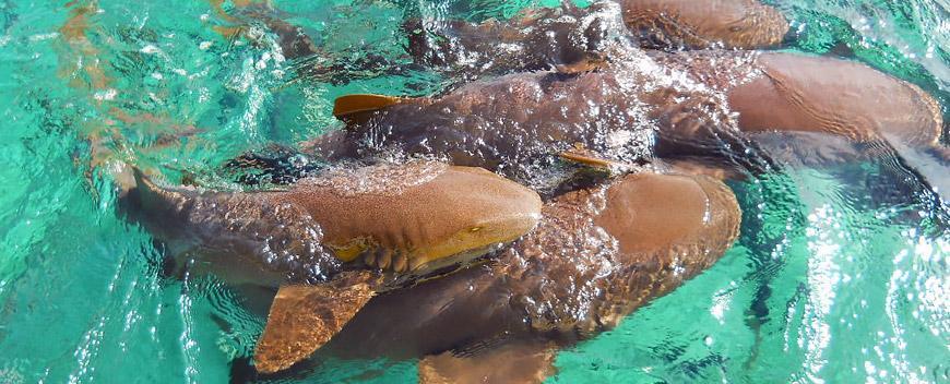 Caye Caulker Belize Shark Alley
