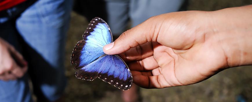 Blue Morpho Butterfly Exhibit