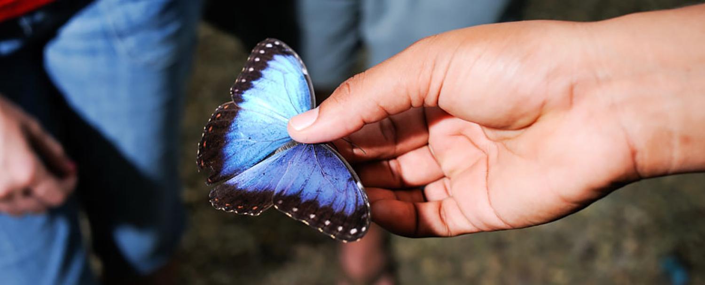 Butterfly Farm at Chaa Creek Belize