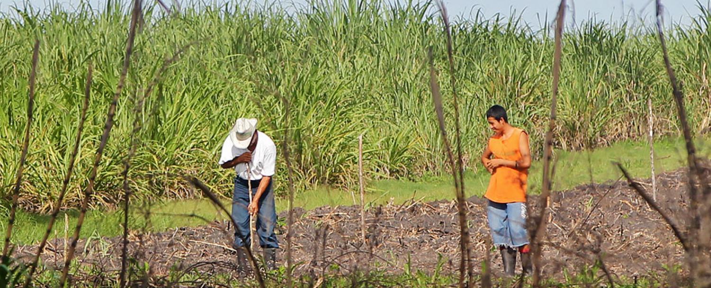Belize Orange Walk District Cane Farmers