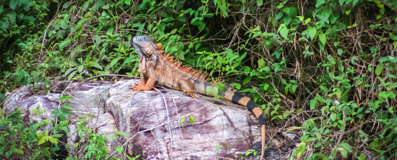 Belize Pontoon Tour on Vaca Lake