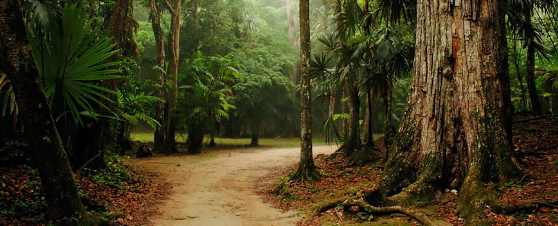 Belize Private Nature Reserve Trail