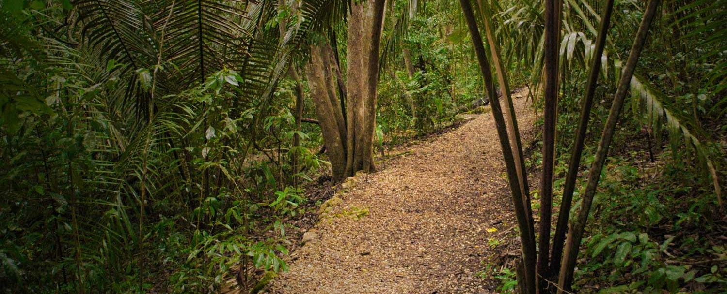 Belize hiking trails at chaa creek reserve