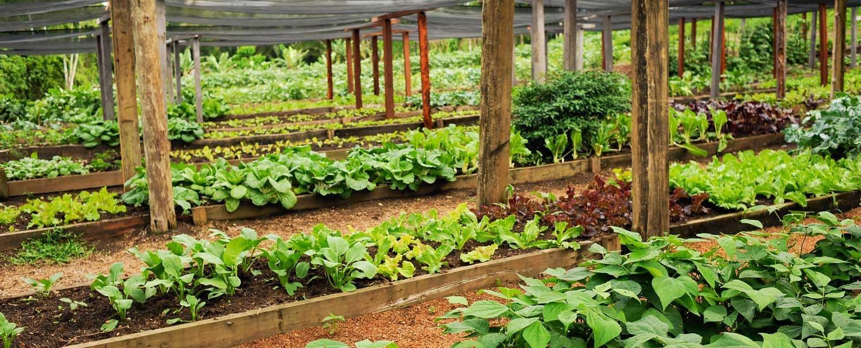 Belize Maya Organic Farming