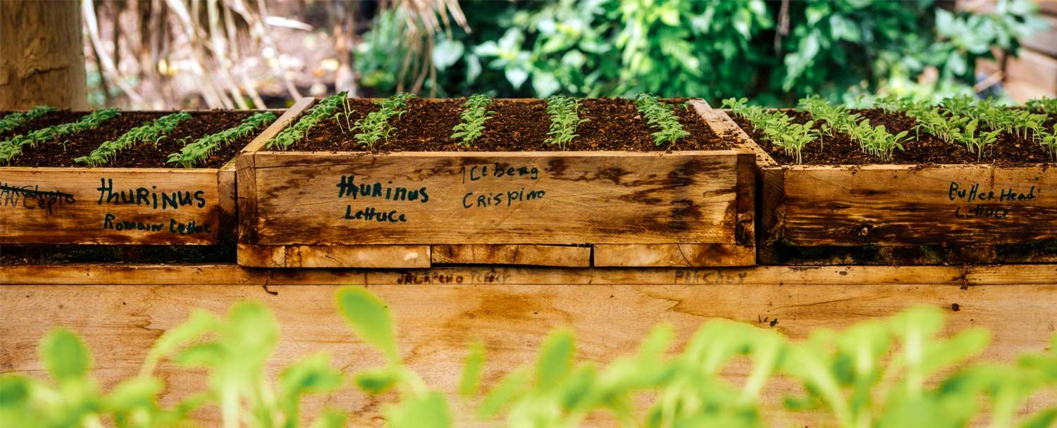 The Maya Organic Farm at Belize's Chaa Creek Grows Seedlings