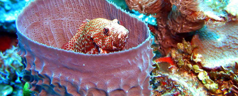 Belize barrier reef marine life by Chaa Creek Resort