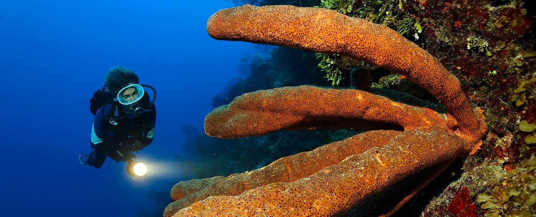 Belize Snorkeling & Diving Tours by Chaa Creek Resort