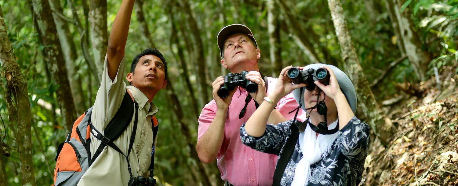 Learn about Birds of Belize with Chaa Creek's birding tours