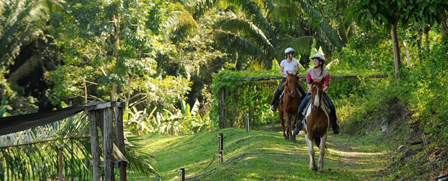 Chaa Creek Horseback Riding Tours