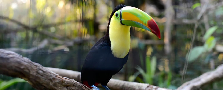 The Belize Zoo Toucan Chaa Creek Tour