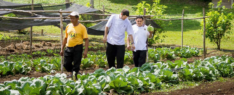 Maya Organic Farm