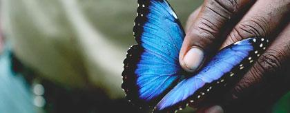 Blue Morpho Butterfly Farm thumb