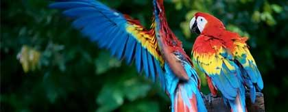 Birds of Belize Tours by Chaa Creek Eco Lodge's Naturalist Guides