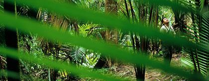 Belize Nature Reserve