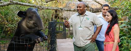 The Belize Zoo Chaa Creek Tour