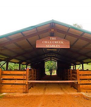 belize story built horse stables